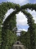 Kings Garden, masses of espaliered Apple Blossom