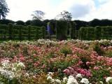 Kings Garden