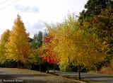 Autumn in Country Victoria   April 2016