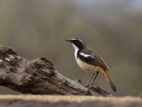 Zimanga game reserve