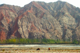 Bactrian Camels, Ghez River Valley, Karakoram Highway, Xinjiang, China