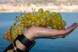 Grapes Await