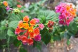 香港花卉 iphone