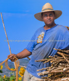 Cuban oxen cart driver