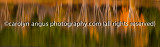 IMGP5265-Edit-2.jpg