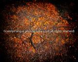 Autumn's Orb
