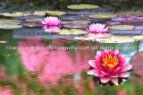 Monet_Inspired_IGP1152
