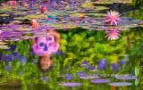 Van Dusen Gardens Reflection.jpg
