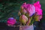 Lotus_Blossoms.jpg