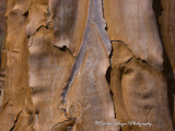 The_Quiver_Tree4