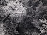 Winter_In_Spring3