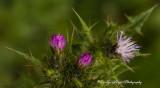 Natures_Tiny_Treasures.jpg
