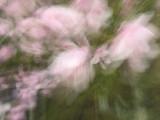 The_Garden_Fairies.jpg