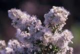 Winter_Weeds.jpg