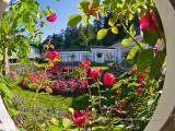 Butchart_Gardens.jpg