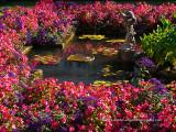 Butchart_Gardens-3.jpg