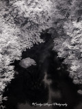 infrared_surrelism