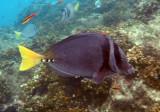 Costa Rica November 2015. Underwater camera.