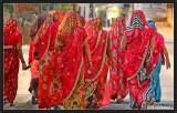 The Procession of Saris. Dundlod (Shekawati).