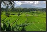 Rice Fields around Mount Seraya (East Bali).