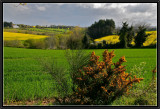 In the Fields of Cornouaille.