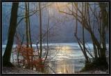 Pale Winter Light.
