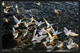Gulls. Sunset light.
