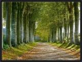 The Autumn Path.