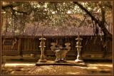 But Thap Pagoda. Main Yard.