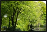 The Green Foliages of Spring.