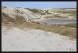 Dans les dunes littorales.
