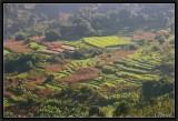 Terraces Fields near Yuanyang.