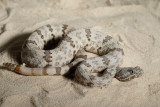 Captive Snake Photography