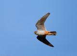 Birdtrip Mallorca May 2014