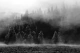 wawona early fog 2