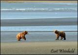 Beach Bears