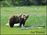 Bear branch