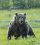 Ma Bear
