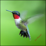 Ruby-throat