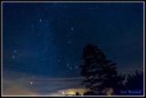 Pine tree & Constellation Orion