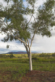 Kimberley DayTrip - March 21st, 2007