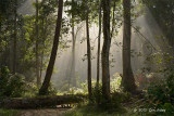 Panti Forest