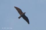 Hawk, Bat