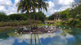 Flamingos at Disney Animal Kingdom