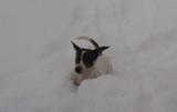 snow 12-6-13 001.jpg