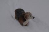 snow 12-6-13 003.jpg