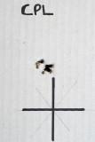 HW 30K 177 Crosman Premier 7.9gr 25 Yards 12mm ctc