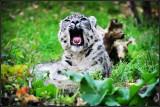 Bronx Zoo 2016