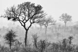Landscape in Kruger