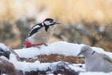 Winter_ Birds,Landscapes and more
